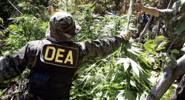 25 Lies About Cannabis on the DEA Website — Refuted by the DEA Itself in 2016