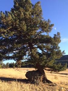 a tree through struggles