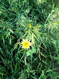 yellow flower in tall grass