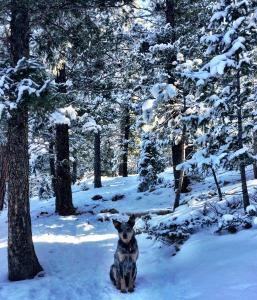 Woody on a snowy hike