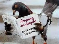 pidgeon lessons
