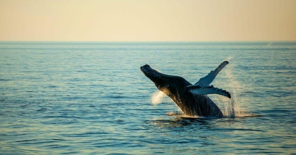 Batemans Bay whale watching