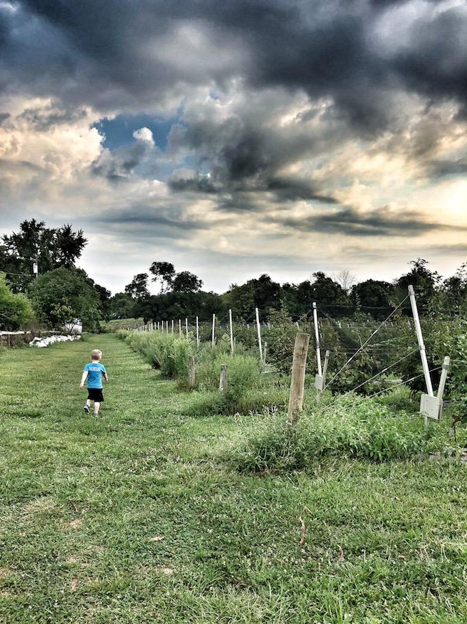 Indian Springs Berry Farm