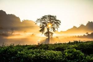 Morning Sunrise - The Leslie Link