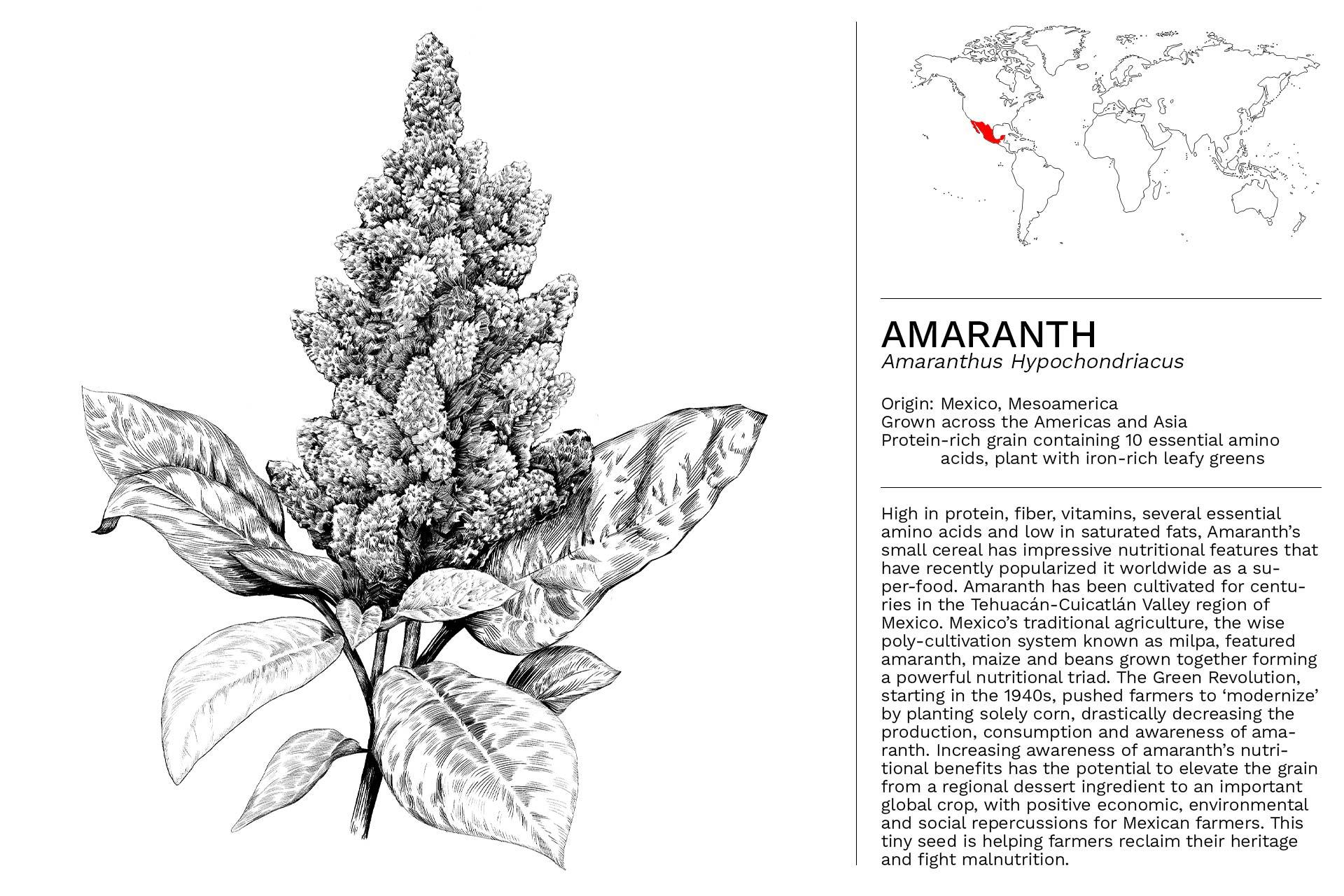 AMARANTH_Slideshow