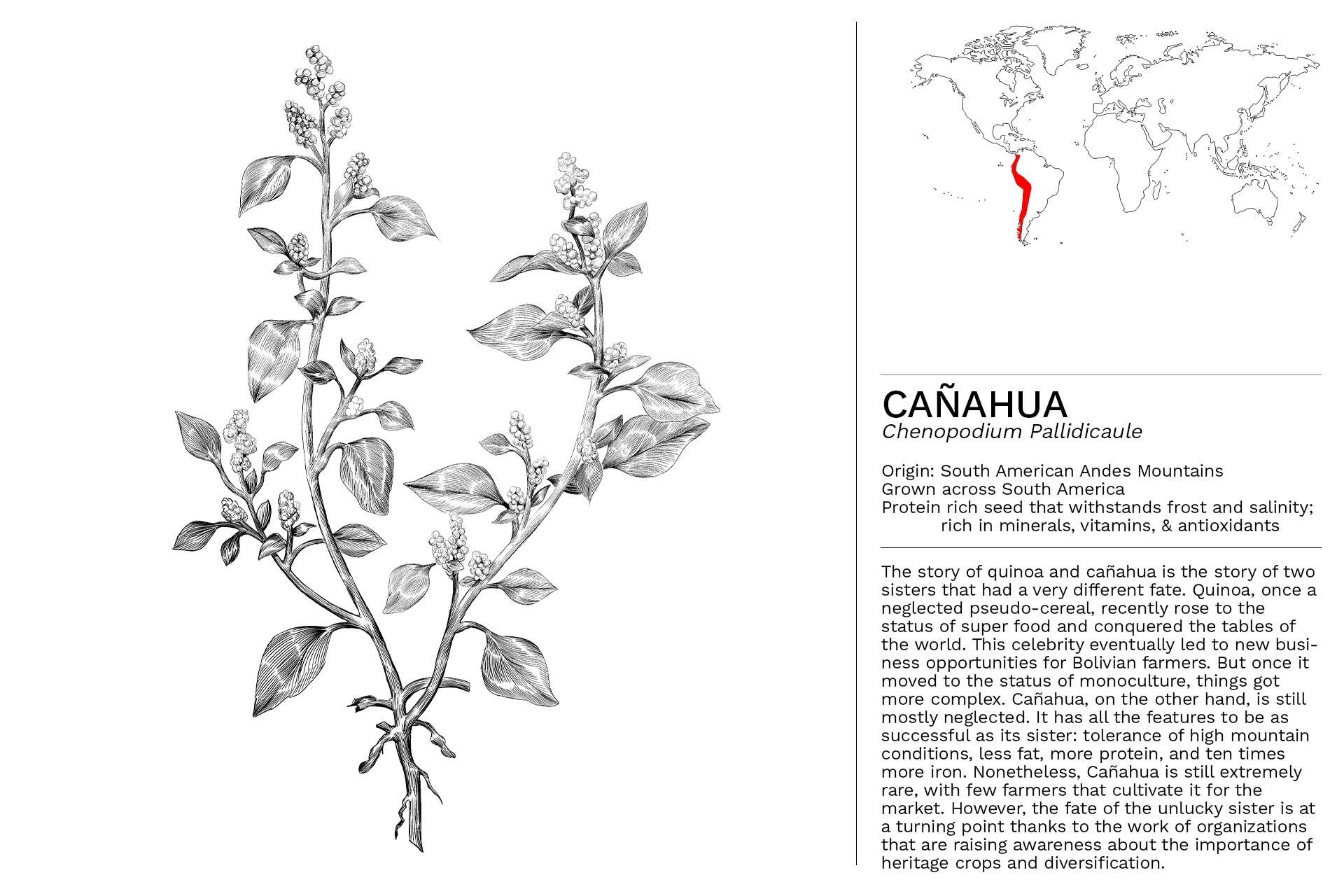 CANAHUA_Slideshow