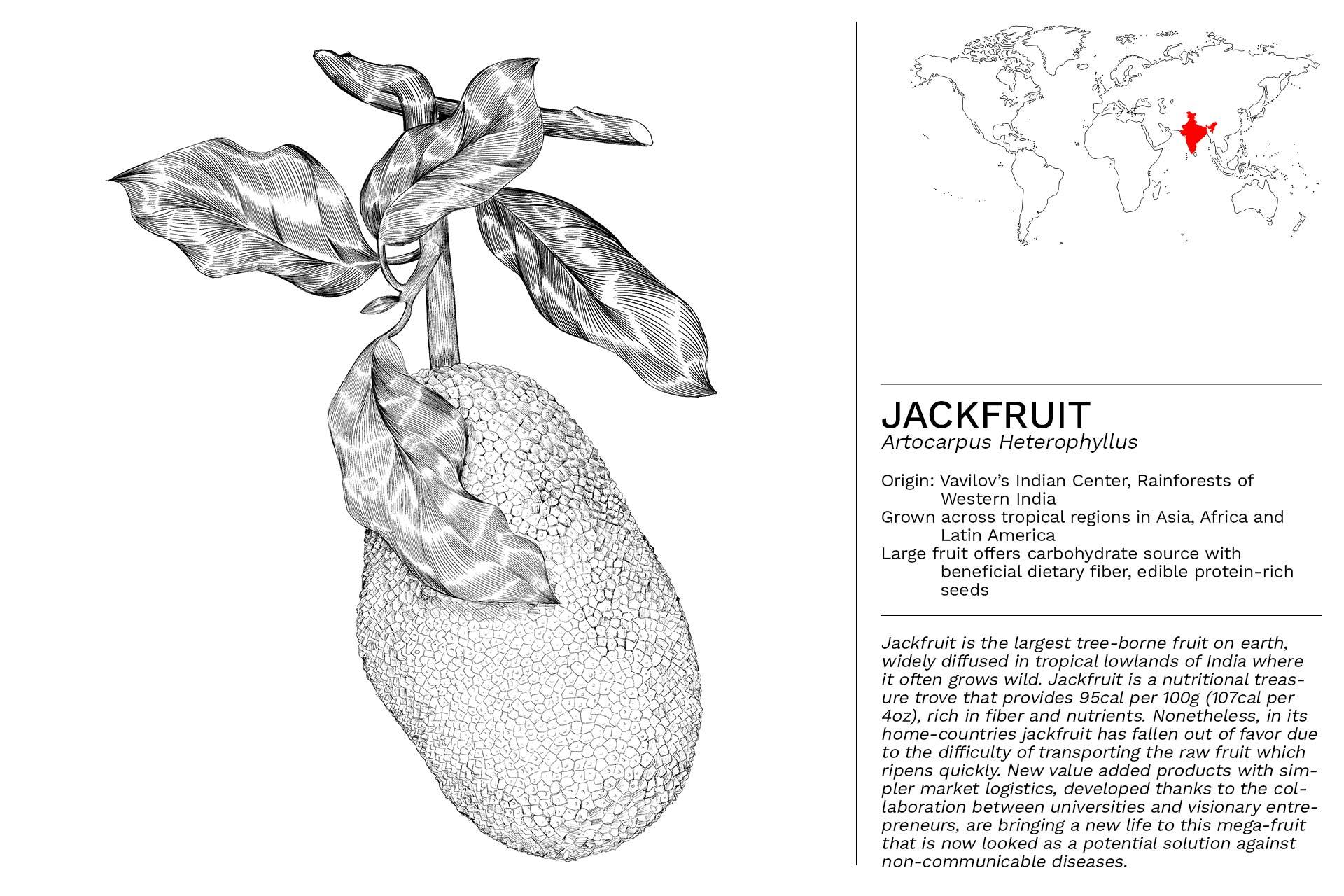 JACKFRUIT_Slideshow