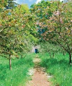 Secret Garden The Lilias Graham Trust