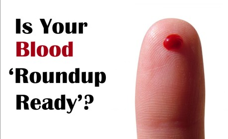 roundup_ready_blood_gmos