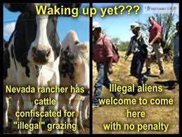 bundy-cattle-confiscated