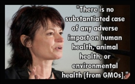 GMO health Impact