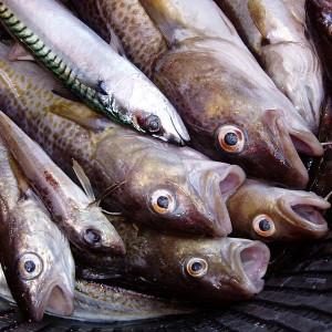 Mass-Fish-Deaths-Photo-by-Mats-Hagwell-300x300