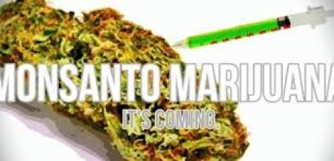 med marijuana