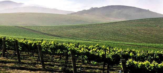 vineyard 3 30 16