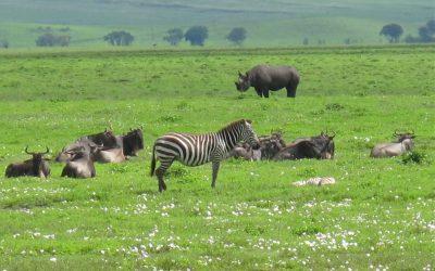 Tanzanian Safari:  An Admitted Animal Lovers Dream Trip