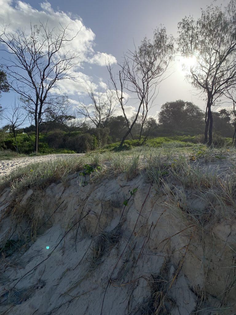 Dunes and sunshine