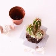Een-cactus-in-een-box-(10-van-10)