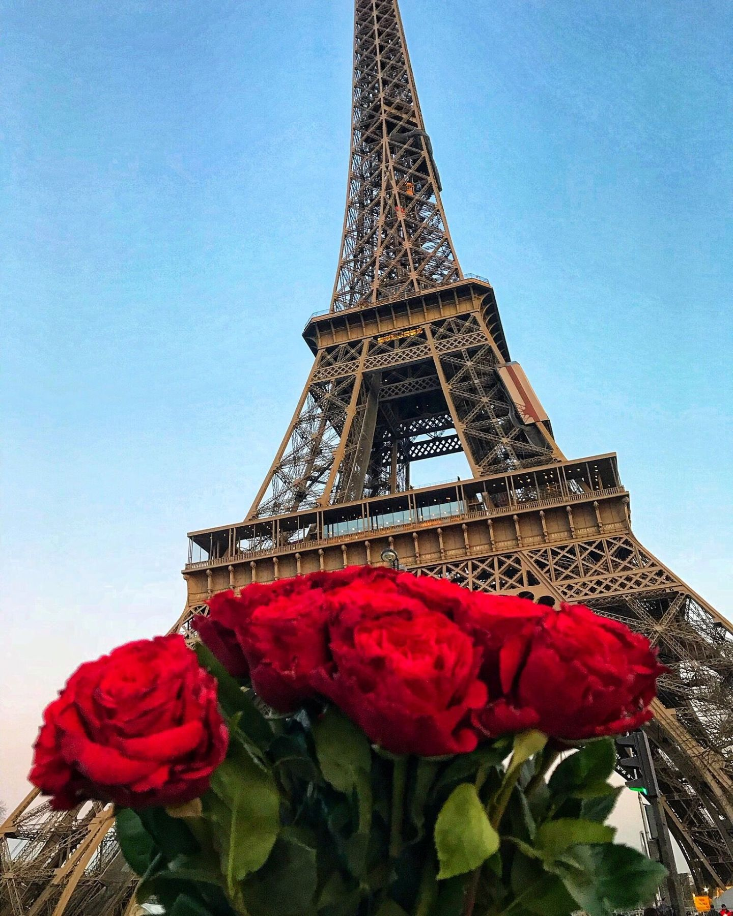 Paris city of love - Red roses under The Eiffel Tower