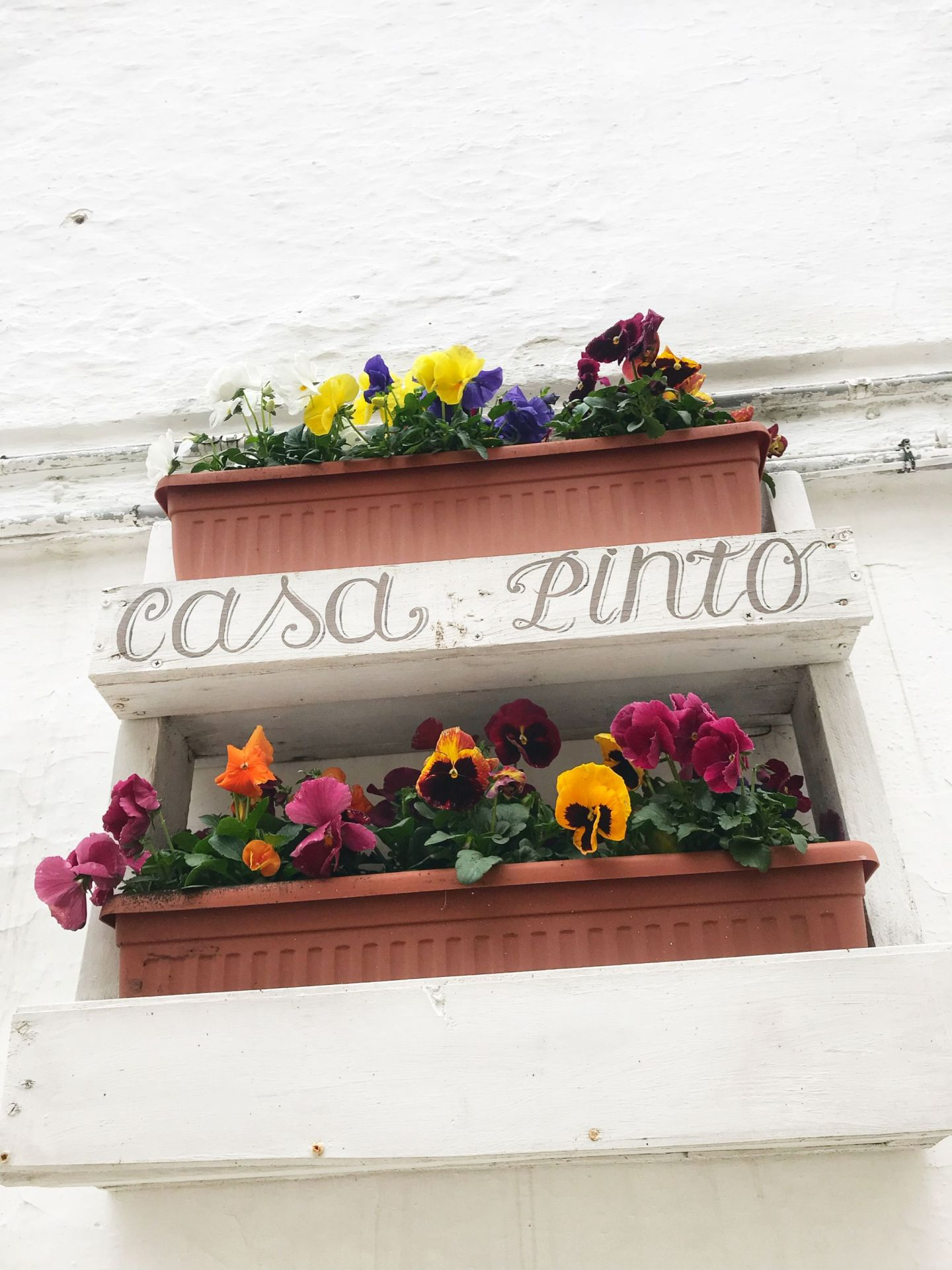 Casa Pinto Pansies window box in Locorotondo
