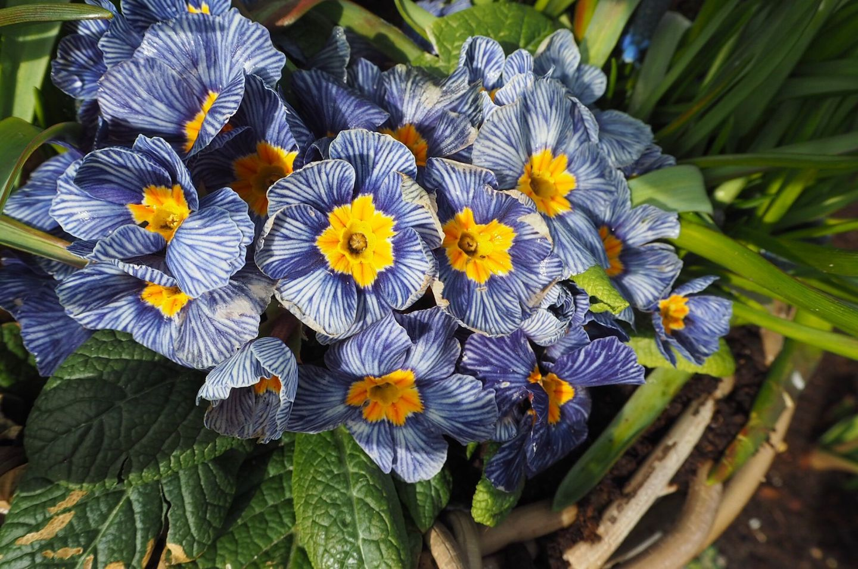 pretty flowers at Keukenhof Tulip Gardens