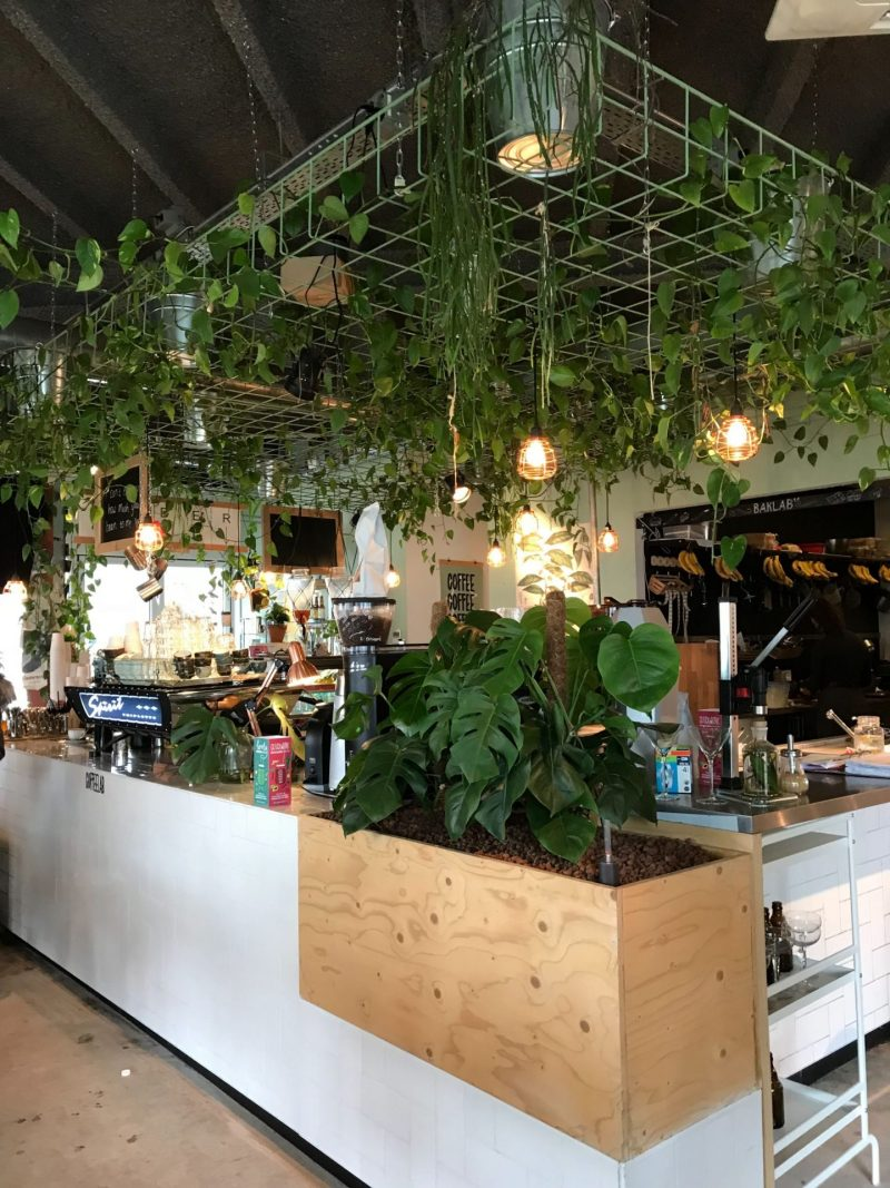 Plant life and foliage at Coffeelab Eindhoven