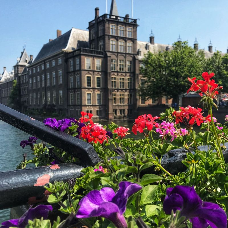 Flowers-overlooking-Binnenhof-Buildings-The-Hague