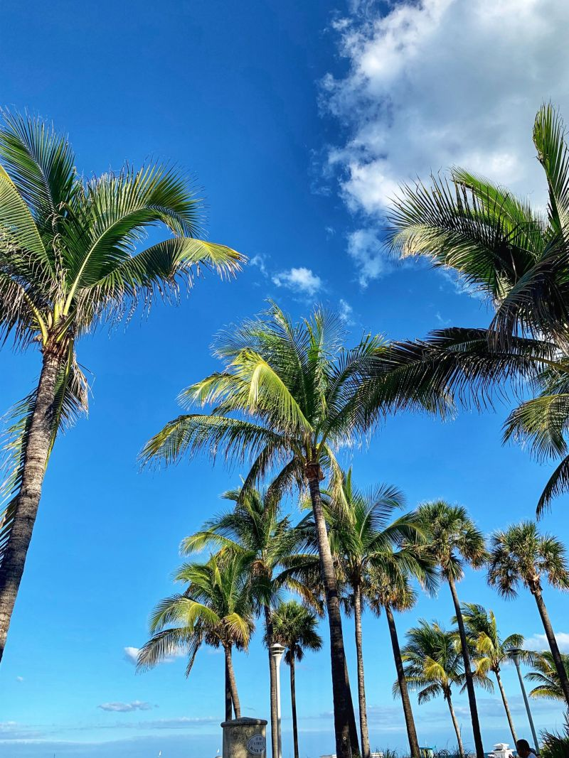 South-beach-the-best-of-Miami-attractions