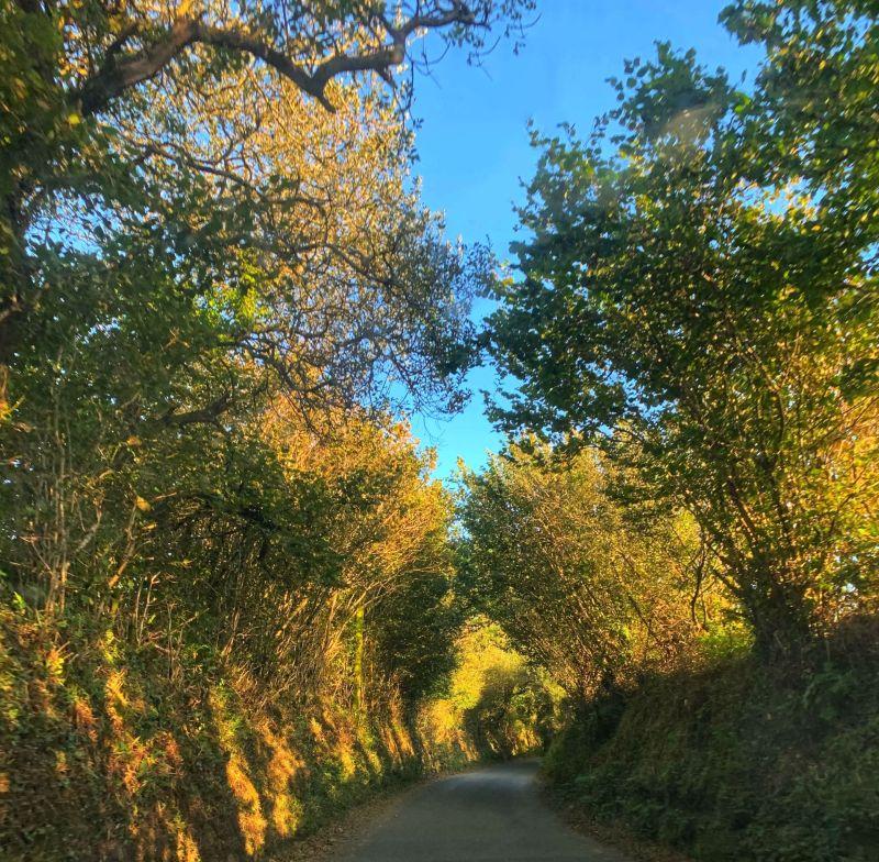 Autumn-colours-Cornwall-road-trip