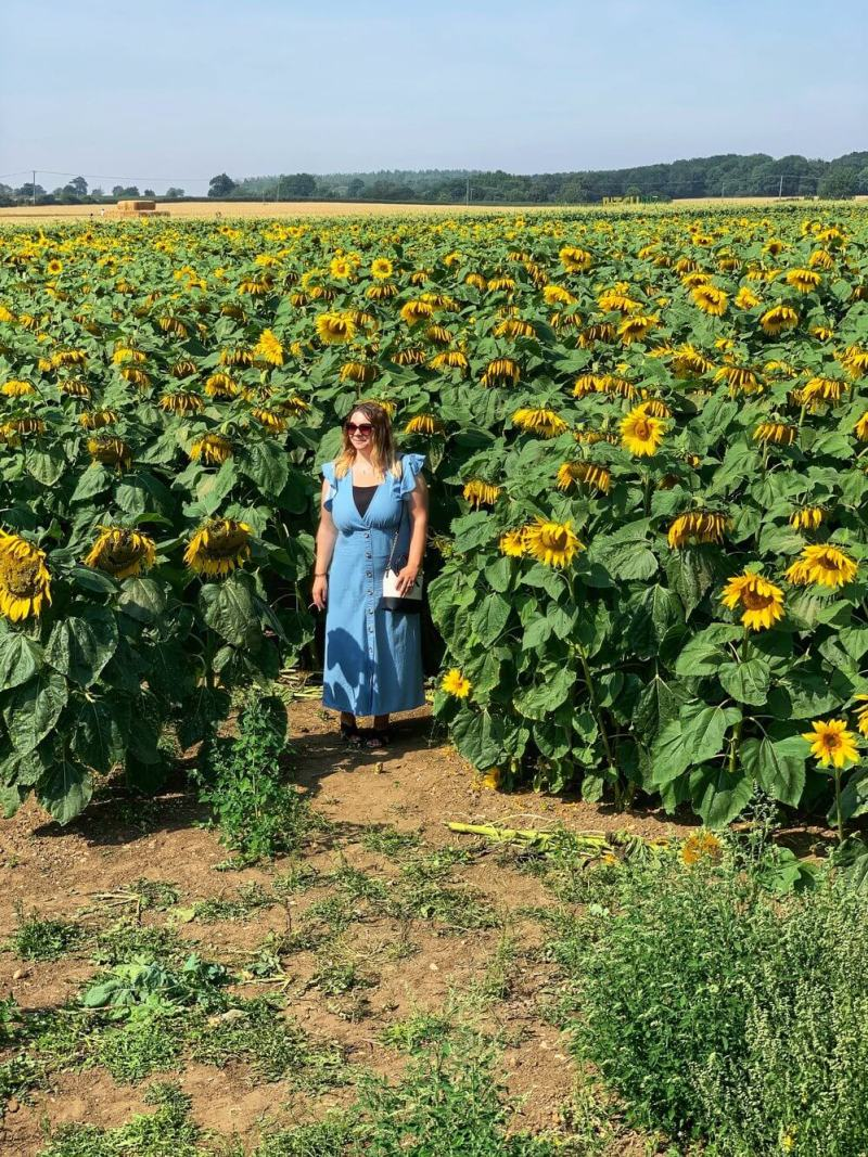 how to visit the patch mk sunflower field milton keynes