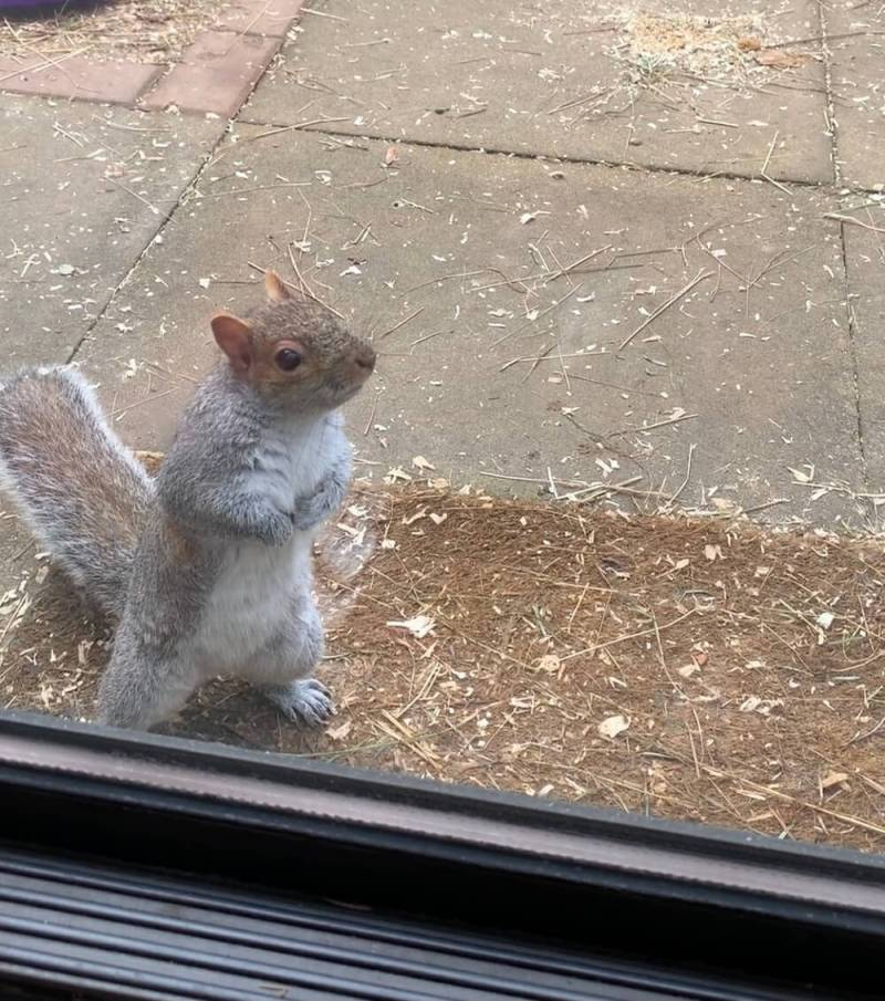 My Squirrely Squirell - Find joy in the little things