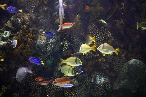 Aquarium At The Mirage Las Vegas