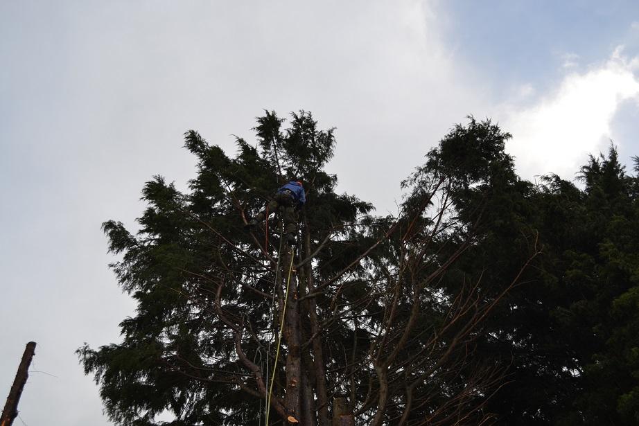 march 2016 conifer fell