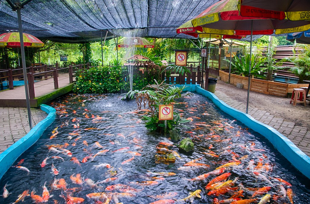 Places for kids this june holidays the little red blog for Koi pool opening times
