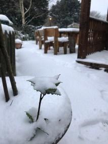 Snow on leaf in Pot Garden