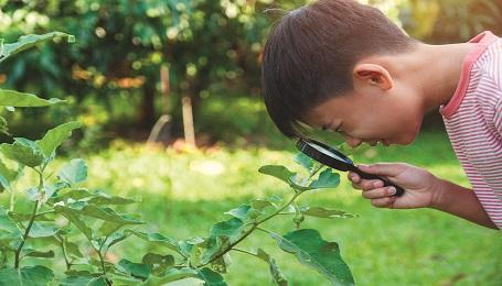 diseases in the garden