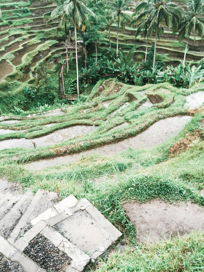 bali ubud tegalalang rice terraces