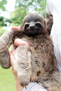 Baby Sloth. Love.