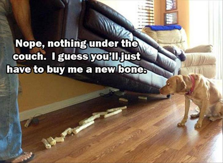 funny animal meme dog looks under couch