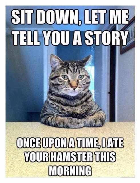 funny animal cute cat