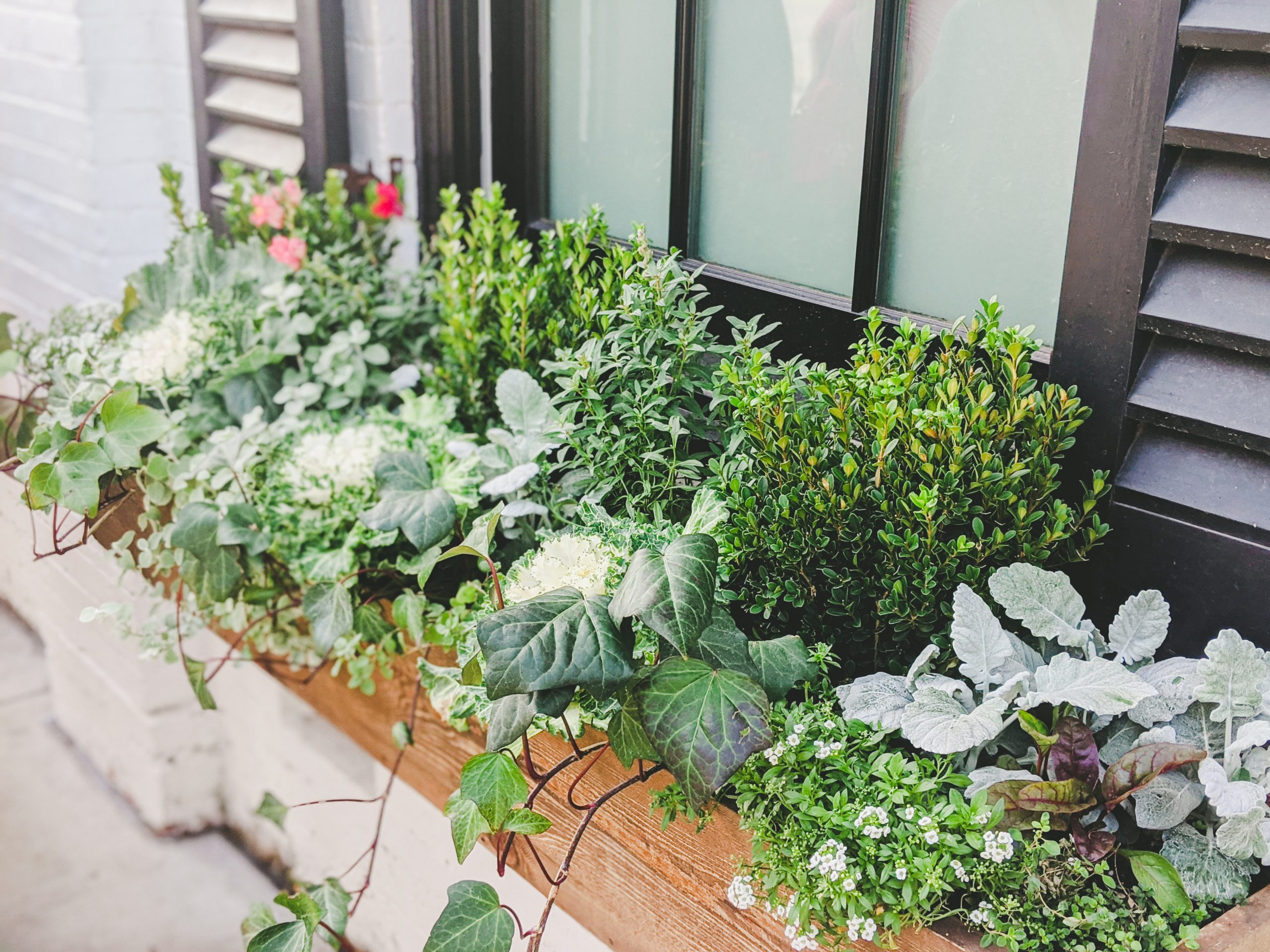 silos baking co. window garden box with boxwood and cabbage