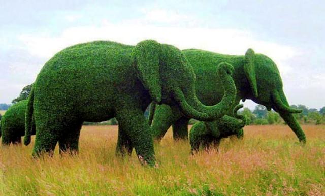 animais topiary