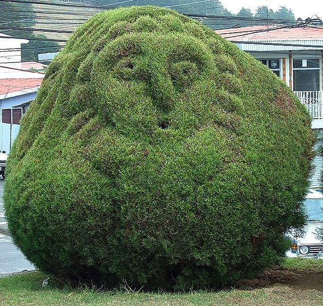 caráter topiary