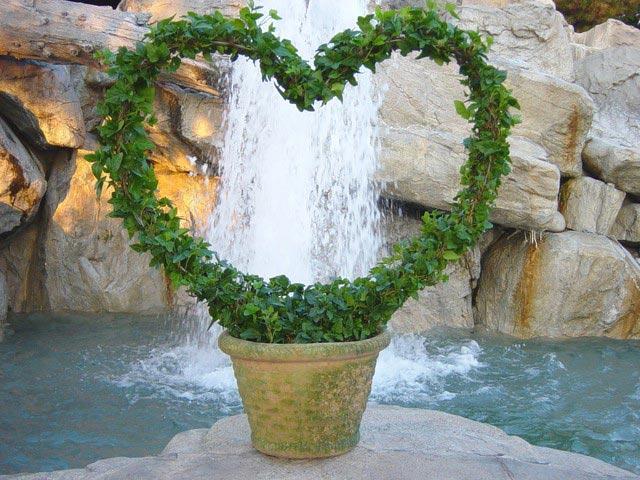 coração hera topiary