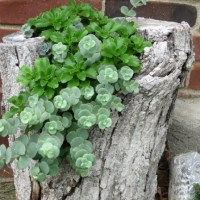 Creative DIY Gardening Idea # 15: Tree Trunk Planter