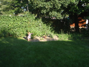 urban garden Ottawa Ontario compost soil sustainable agriculture