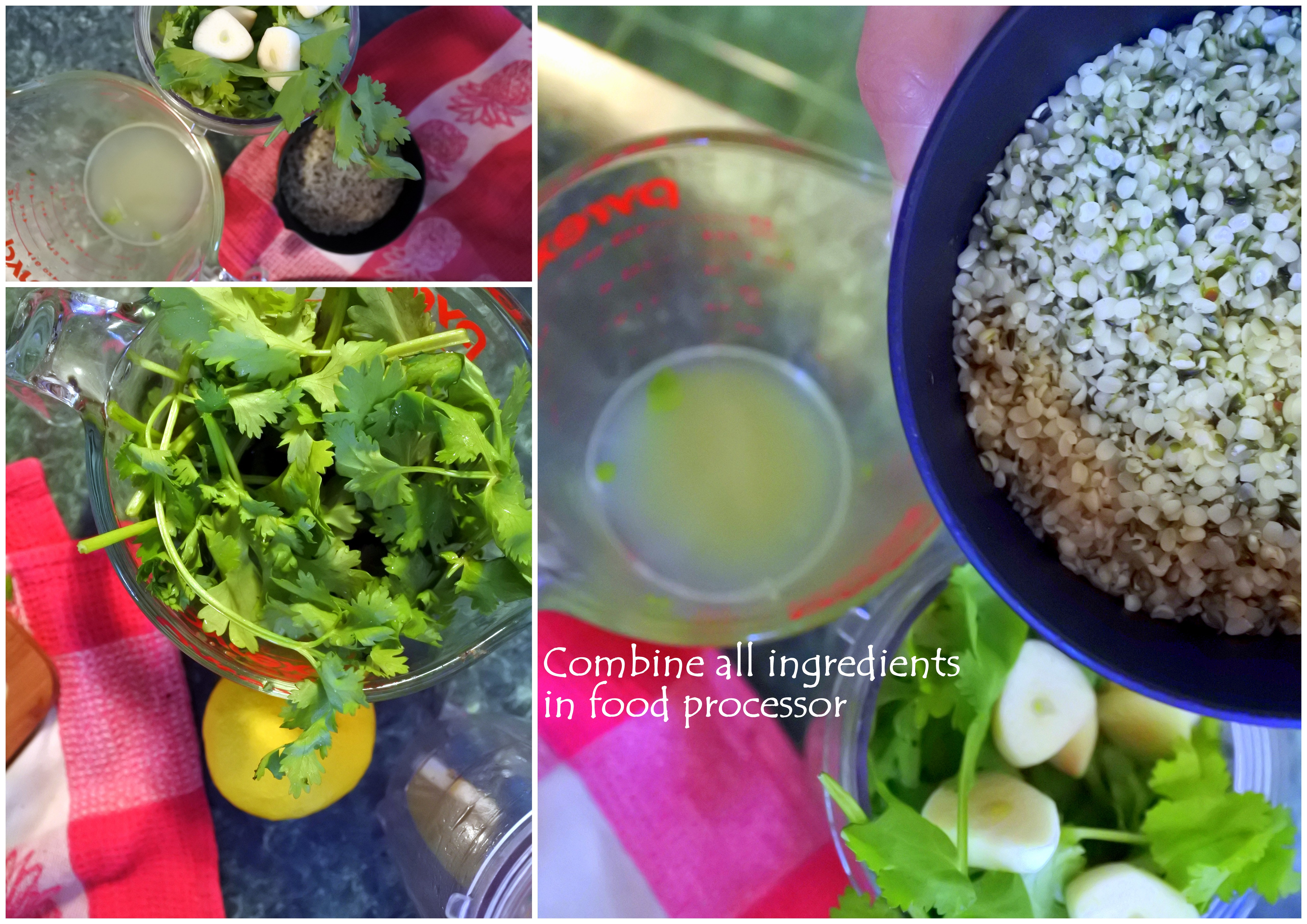 cilantro hemp greens garden cooking with kids teaching learning edible crafts