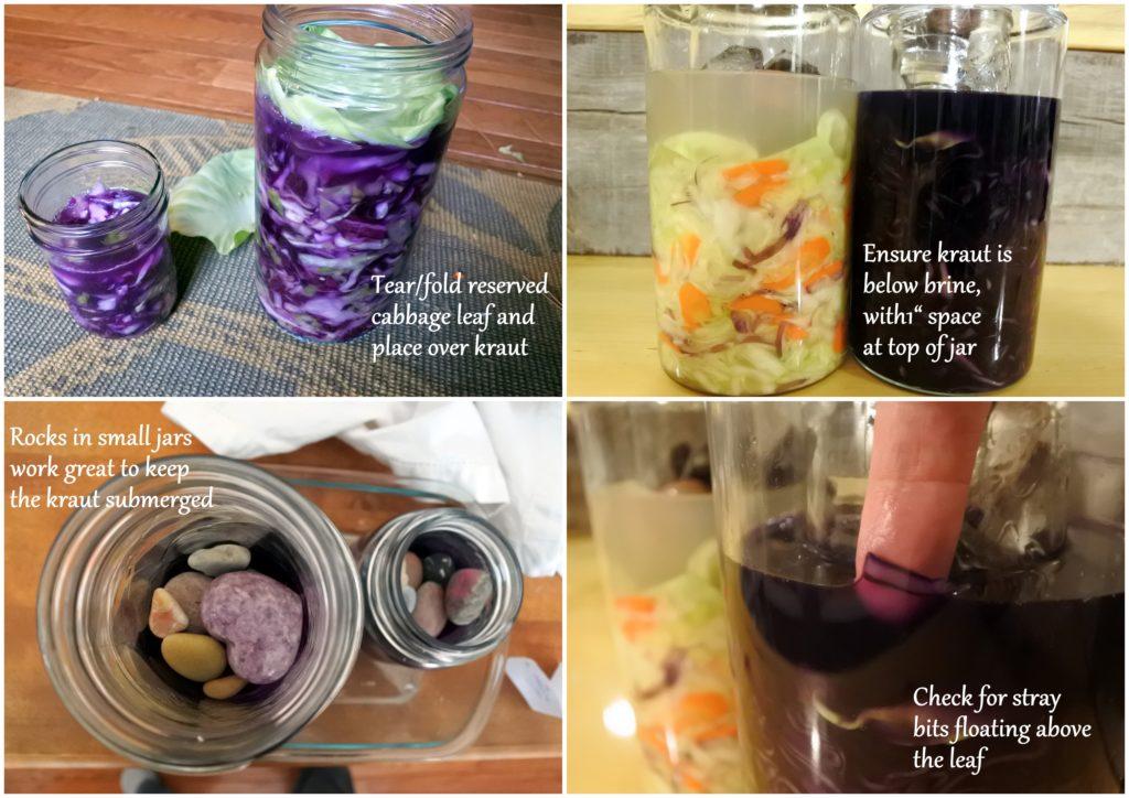 fermented sauerkraut lactofermentation probiotics gut health ottawa foodie jackie lane recipe zero waste