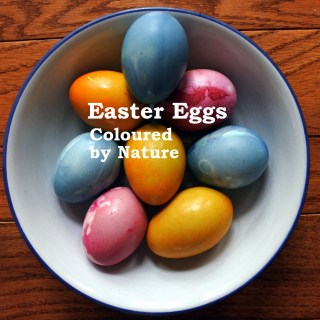 Easter Eggs, Coloured by Nature