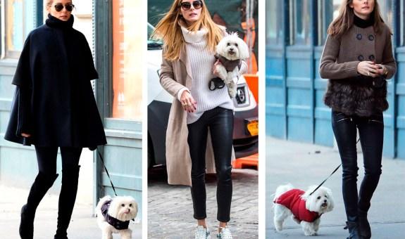 Lleva a tu perro a la moda y abrigadito
