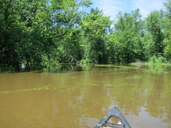 bark-river-wisconsin-canoeing-002